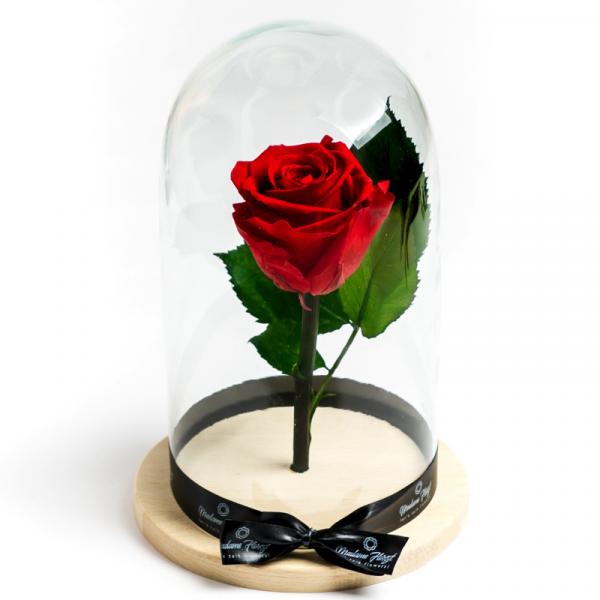 MF151 Trandafiri Criogenati 23h Events