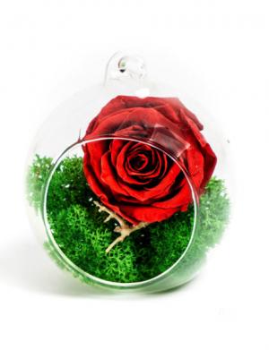 Aranjament trandafiri criogenati MF250