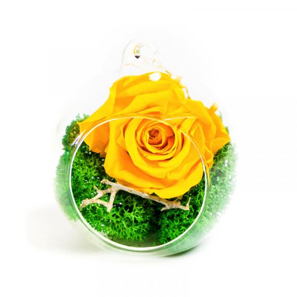 MF251 Trandafiri Criogenati 23h Events