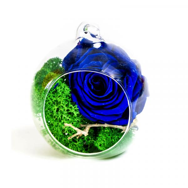 MF254 Trandafiri Criogenati 23h Events