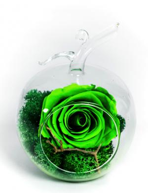 Aranjament trandafiri criogenati MF277