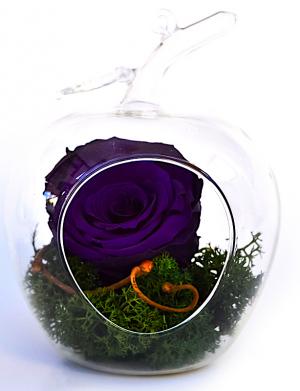 Aranjament trandafiri criogenati MF109