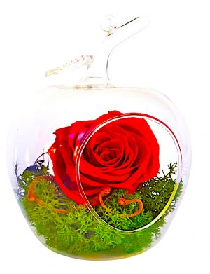 Aranjament cu 1 trandafir criogenat si lichini stabilitati, in bol de sticla de forma marului MFB110