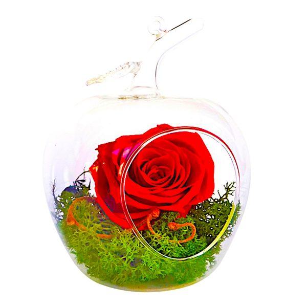 MF110 Trandafiri Criogenati 23h Events