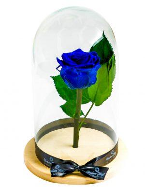 Aranjament trandafiri criogenati MF192