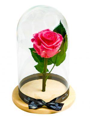 Aranjament trandafiri criogenati MF193