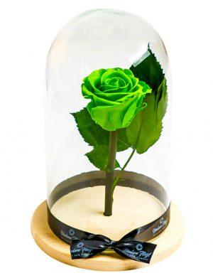 Aranjament trandafiri criogenati MF229