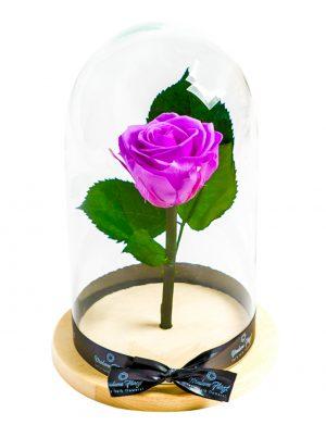 Aranjament trandafiri criogenati MF232