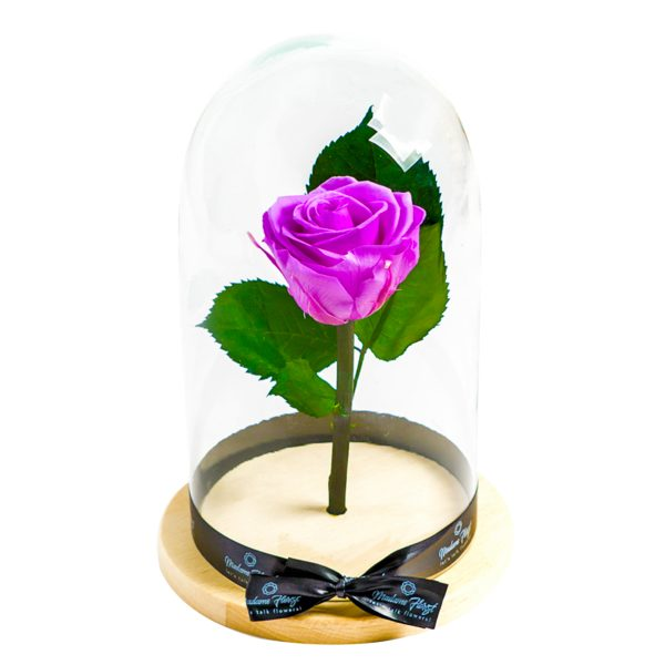 MF232 Trandafiri Criogenati 23h Events
