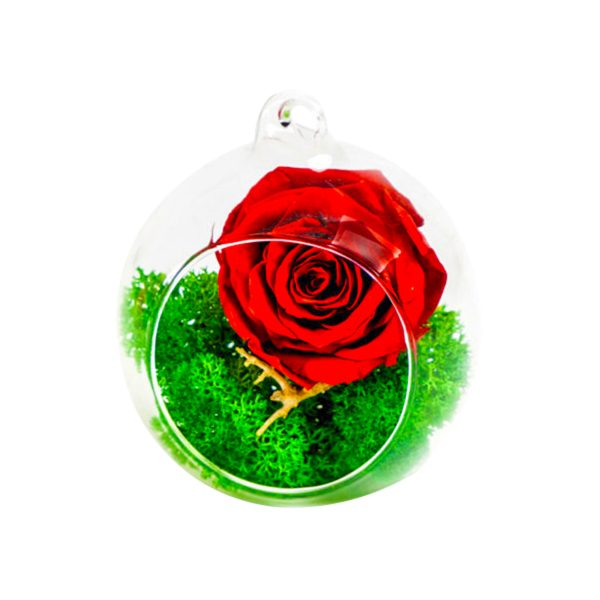 MF250 Trandafiri Criogenati 23h Events
