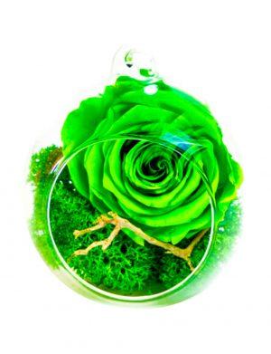 Aranjament trandafiri criogenati MF253