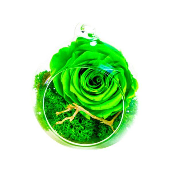 MF253 Trandafiri Criogenati 23h Events
