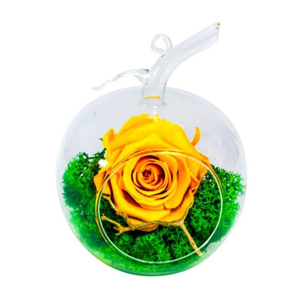 MF275 Trandafiri Criogenati 23h Events